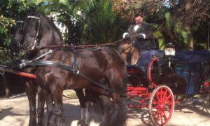 carruaje-caballos-spots-publicidad-rodajes-cine-sealand-motion-01